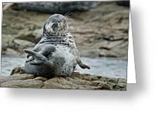Seal Stretch Greeting Card