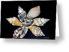 Seashell Floral Greeting Card