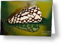 Seashell Wall Art 4 - Conus Marmoreus Greeting Card