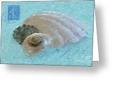 Seashells In Aqua Greeting Card