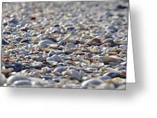 Seashells Greeting Card