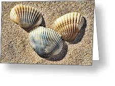 Seashells V2 Greeting Card