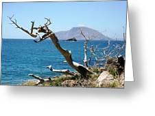 Seaside Tree Greeting Card
