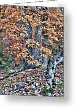 Season Change At Lost Maples Greeting Card