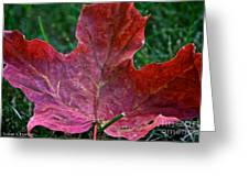 Seasonal Changes Greeting Card