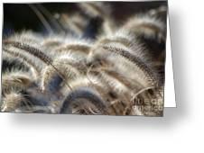 Seasonal Softness Greeting Card