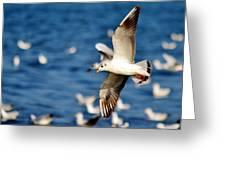 Seaugull Greeting Card