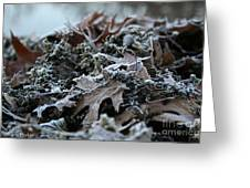 Seaweed And Oak Leaves Greeting Card
