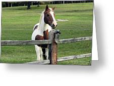 Secrets In The Field Greeting Card