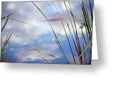 Sedges And Sky Greeting Card