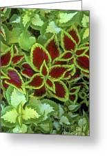 Sedona Floral Greeting Card