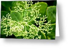 Sedum Droplets Greeting Card