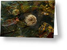 See Of Fossil Three Greeting Card