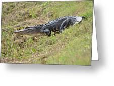 See Ya Later Gator Greeting Card