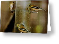 Seed Eating Song Birds Greeting Card