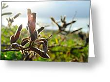 Seed Pod Lens Flare Greeting Card