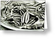 Seedpods Greeting Card