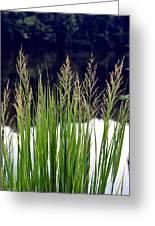 Seedy Grass Greeting Card