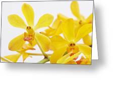 Selective Focus Greeting Card