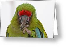 Self-conscious Parrot Greeting Card by Naomi Berhane