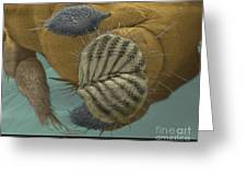Sem Of A Fruit Fly Mouth Greeting Card