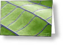 Sem Of Dragonfly Wing Greeting Card
