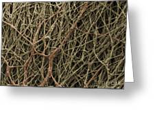 Sem Of Mycelium On Mushrooms Greeting Card