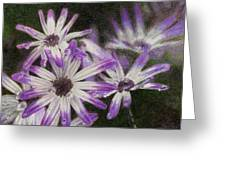 Senetti Pericallis Greeting Card