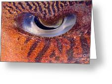 Sepia Cuttlefish Greeting Card