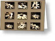 Sepia Daisy Flower Series Greeting Card by Sumit Mehndiratta