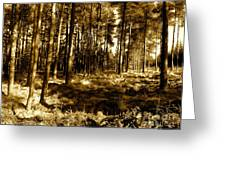 Sepia Forest Greeting Card by Jessica Hubner