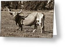 Sepia Longhorn Cow Greeting Card
