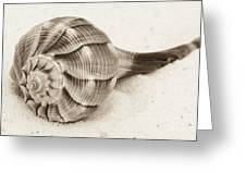 Sepia Shell Greeting Card
