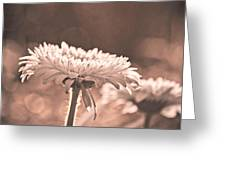 Sepia Sweetness Greeting Card
