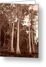 Sepia Trees Greeting Card
