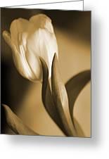 Sepia Tulip 2 Greeting Card