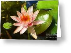 Serene Pink Waterlily  Greeting Card