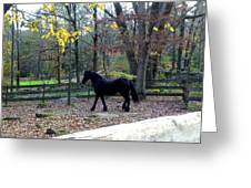 Serene Setting With A Friesian Greeting Card