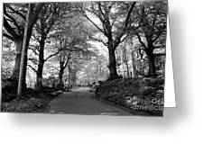 Serene Winding Country Road Greeting Card