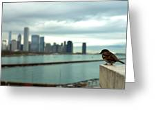 Serenity Of Chicago Greeting Card