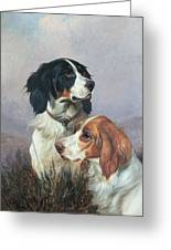 Setters On A Moor Greeting Card by Colin Graeme