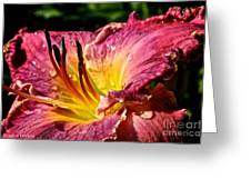 Seven Seals Daylily Greeting Card