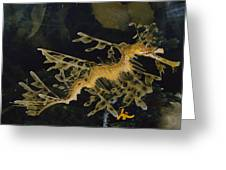Several Views Of The Leafy Sea Dragon Greeting Card by Paul Zahl
