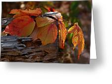 Shade In Fall Greeting Card