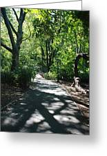 Shaded Paths In Central Park Greeting Card
