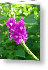 Shades Of Purple Greeting Card