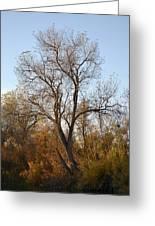 Shadow Cliff Tree Greeting Card