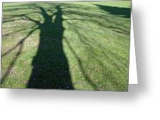 Shadow Of A Tree On Green Grass Greeting Card