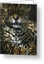 Shadows Flicker Over A Jaguar Panthera Greeting Card by Hope Ryden