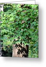 Shadows Of The Sweet Gum Greeting Card